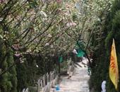 重庆市南岸区灵安陵园 第22张