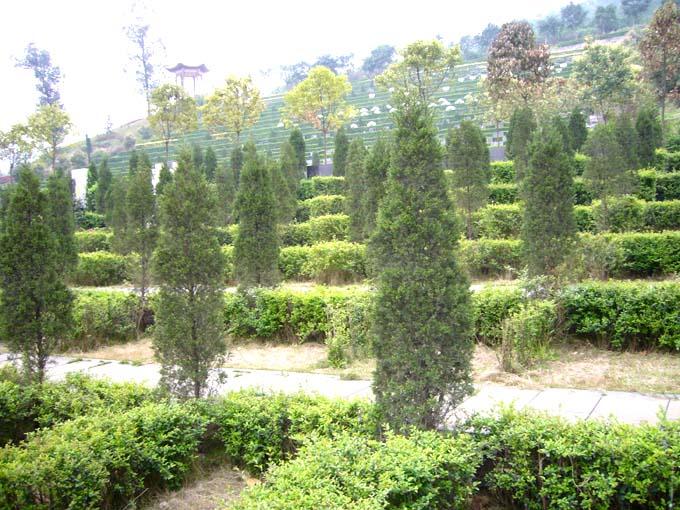 重庆九龙坡龙台山陵园 第11张