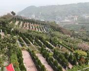 重庆市南岸区灵安陵园 第19张